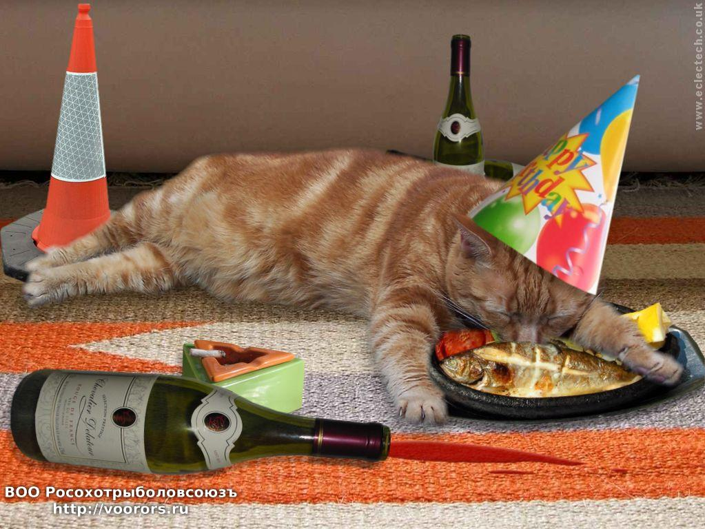 funny-birthday-cat-18-wide-wallpaper[1].jpg