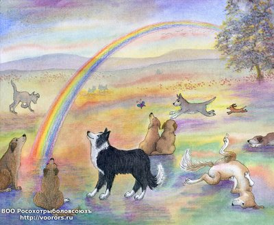 8x10-rainbow-bridge-with-border-collie-V1.jpg